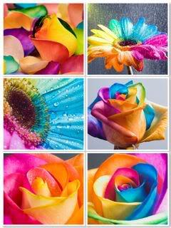 Счастливые розы