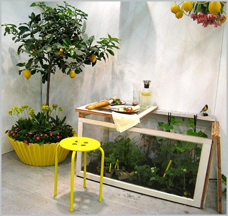 Клубника и лимоны на балконе