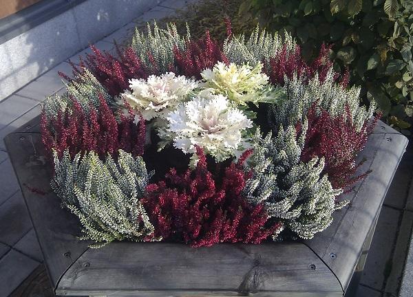 Вереск и брассика в осенней флористике