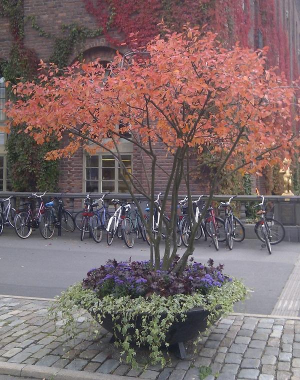 Скандинавский дизайн осеннего оформления улиц