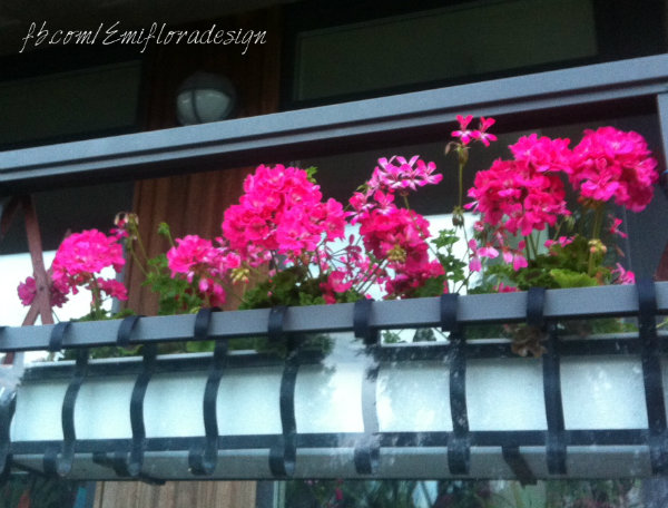Флористика онлайн, фото цветов, герань
