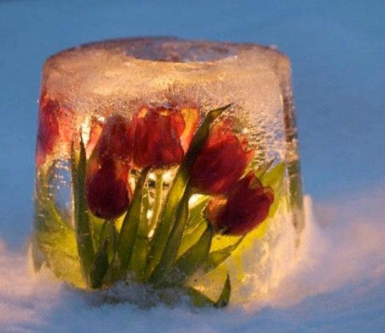 изысканный лед с цветами